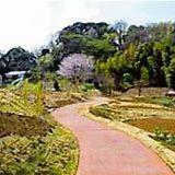 梅の丘公園
