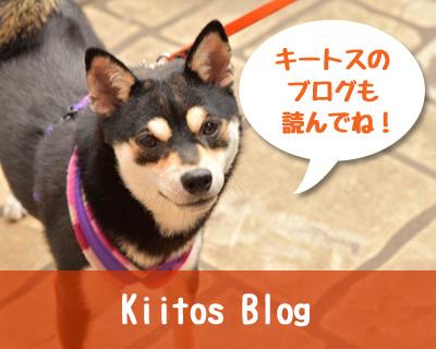 キートスブログ